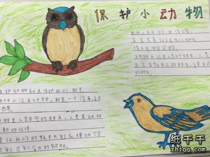 小学生保护动物手抄报